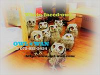 OWL☆WAN